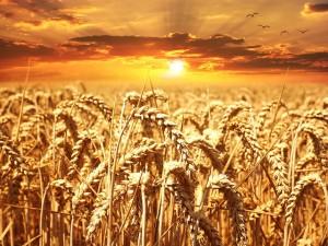 grain moisture
