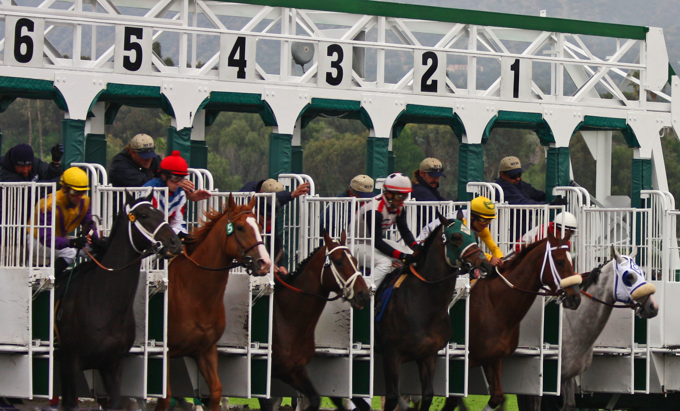 Image result for Horse Race Betting
