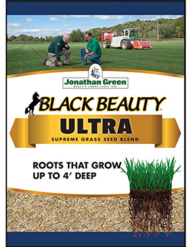 The 5 Best Grass Seeds [Ranked] | Product Reviews and Ratings